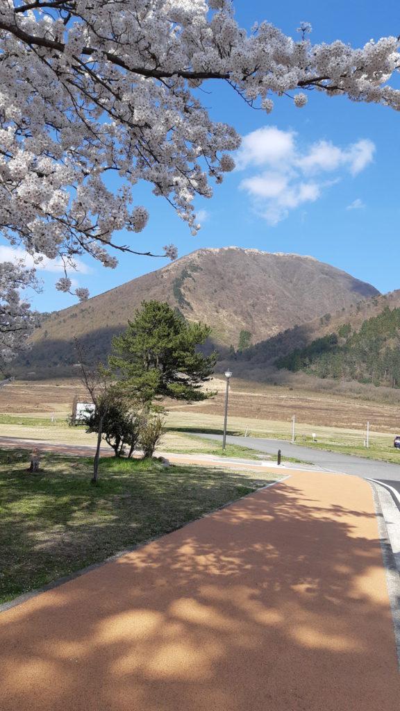 桜と瓦ック薄層樹脂舗装